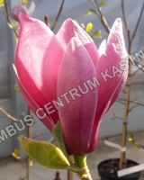 magnolia-may-to-frost-2